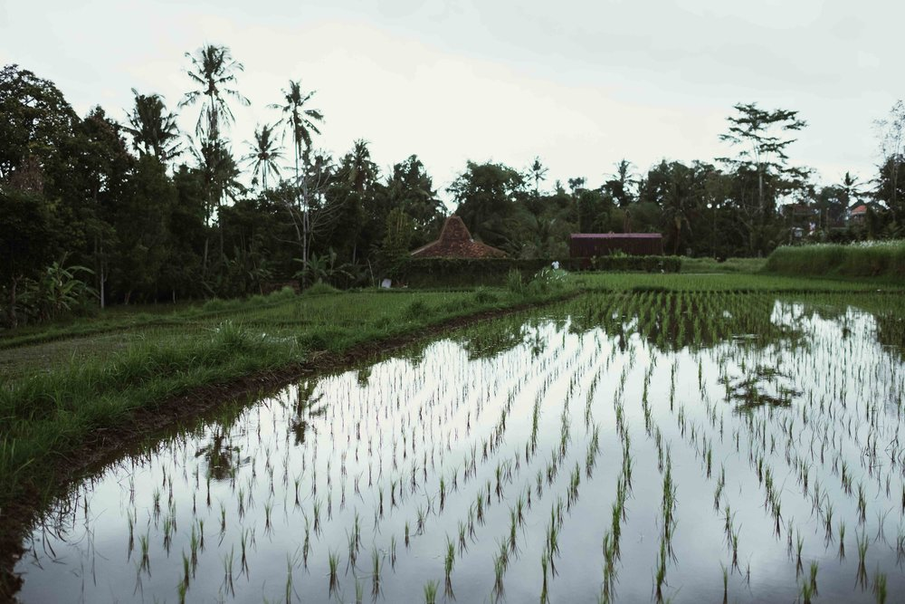 more fields near Ubud centre