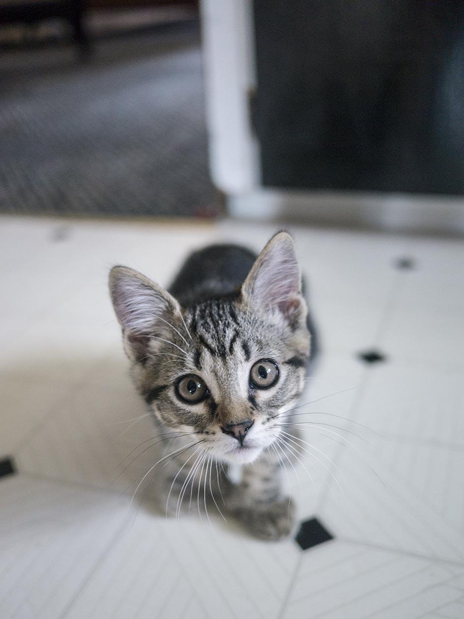 smallcat2.jpg