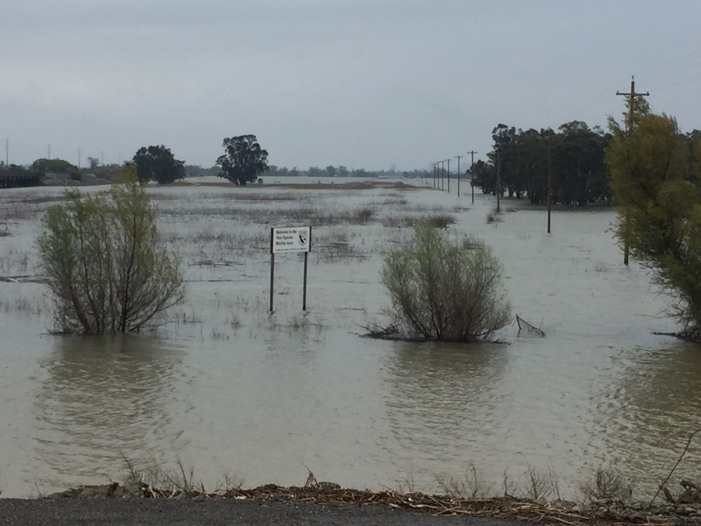 Flooded Yolo Bypass