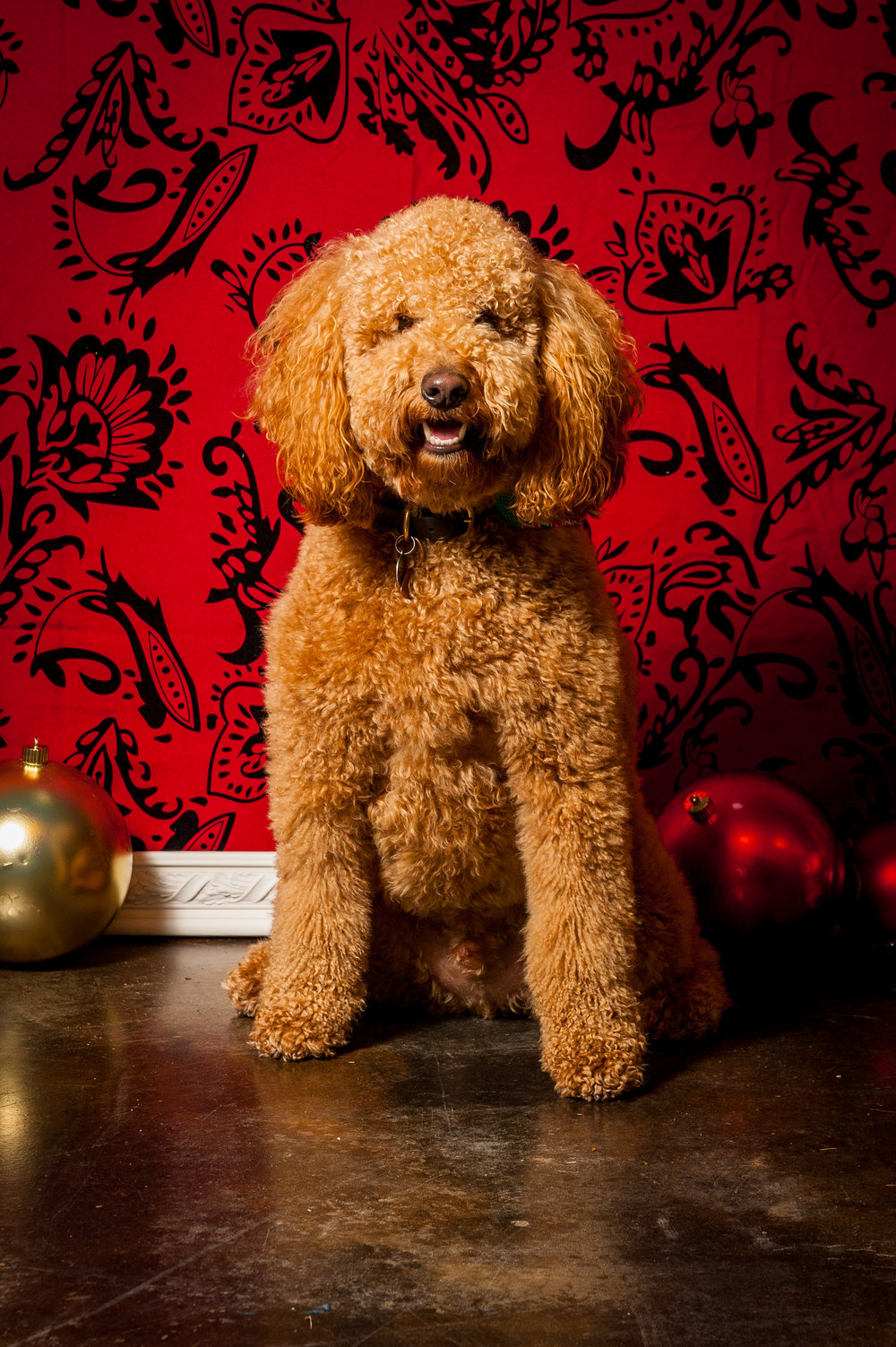 holiday pet portraits by Jim Felder