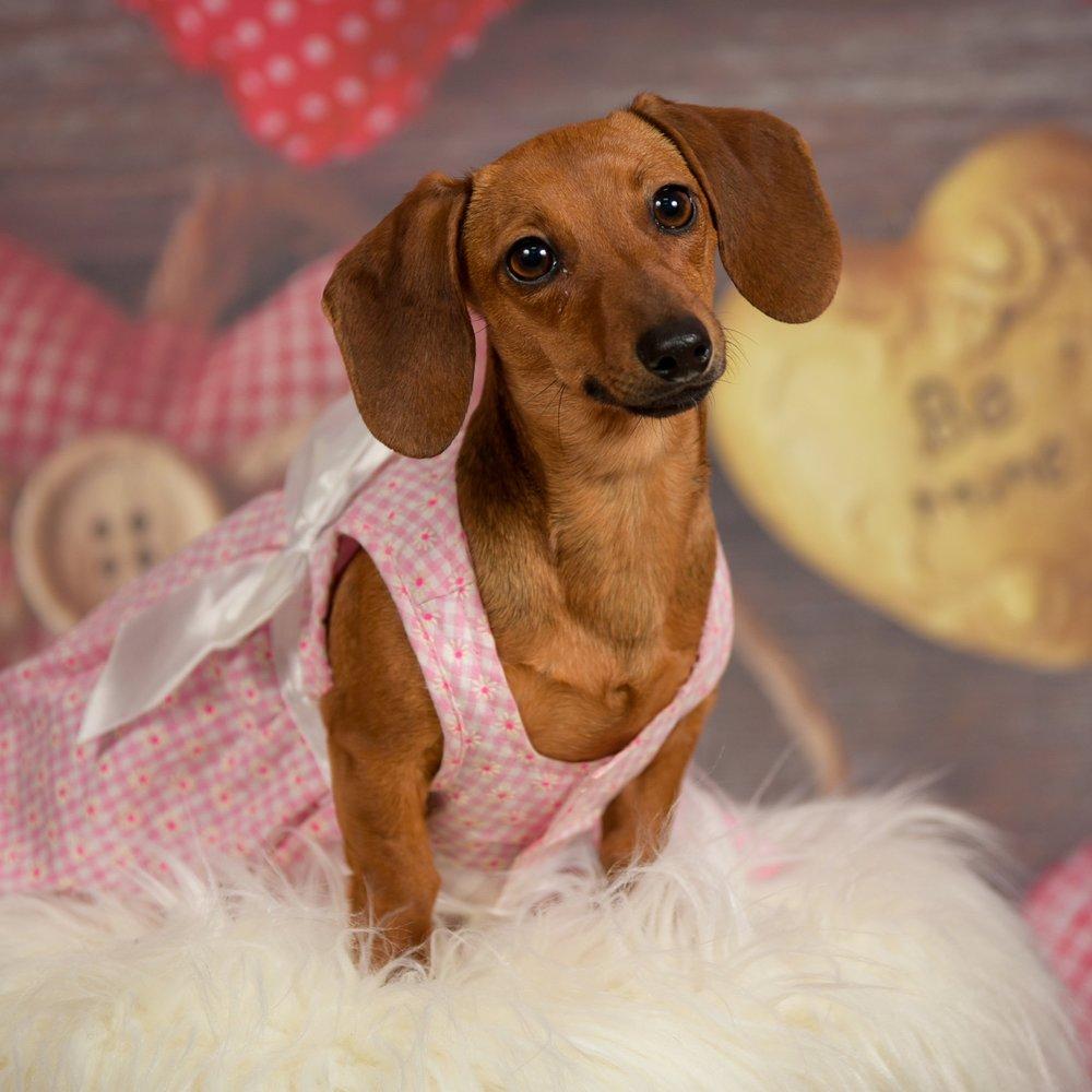 Valentine Pet Portraits 2019