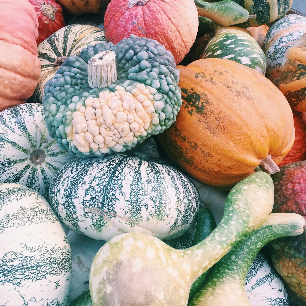 Love all different types and shapes of squash.