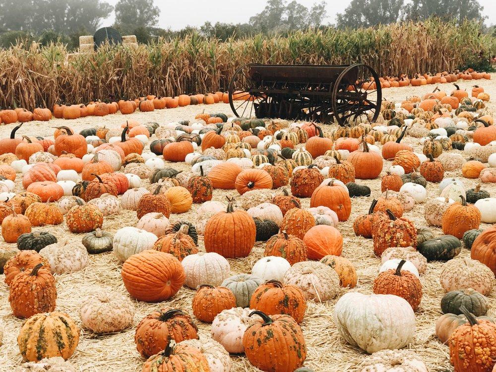 Momlikethat Pumpkin Patch and Trucktor.JPG