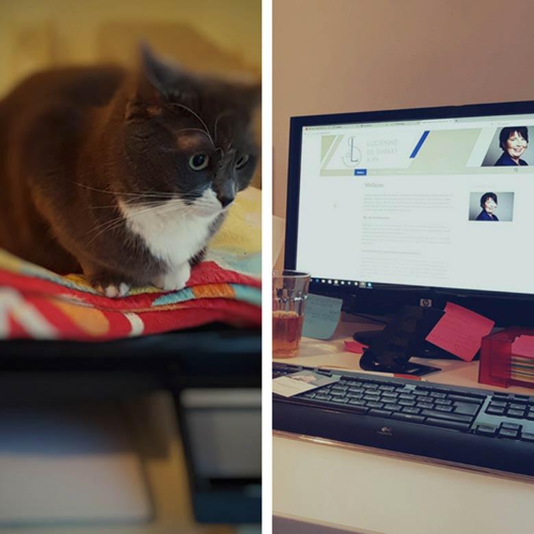 """""""De kat zit altijd bovenop mijn printer als ik aan het werk ben"""", zegt Lucienne."""