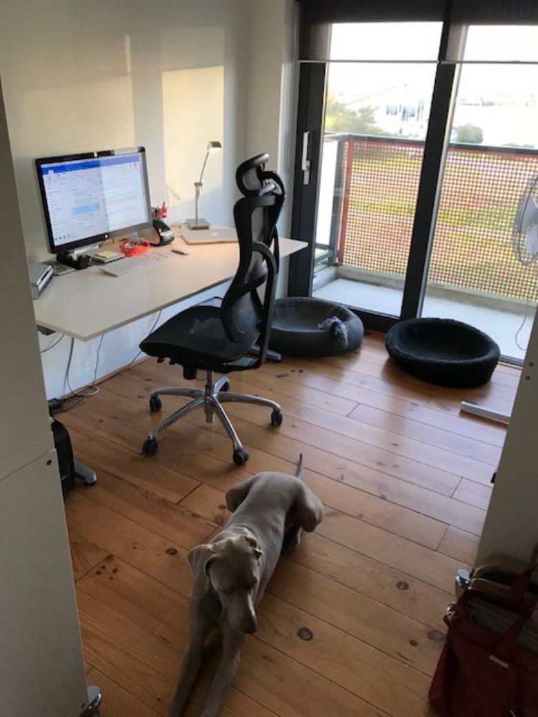 De werkplek van Sylvia Helder (mét een van haar geliefde honden!)
