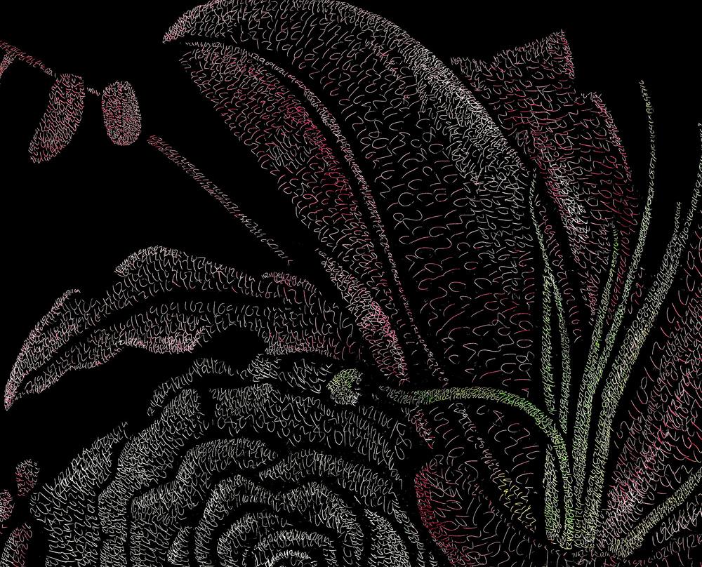rosescolordetail.jpg