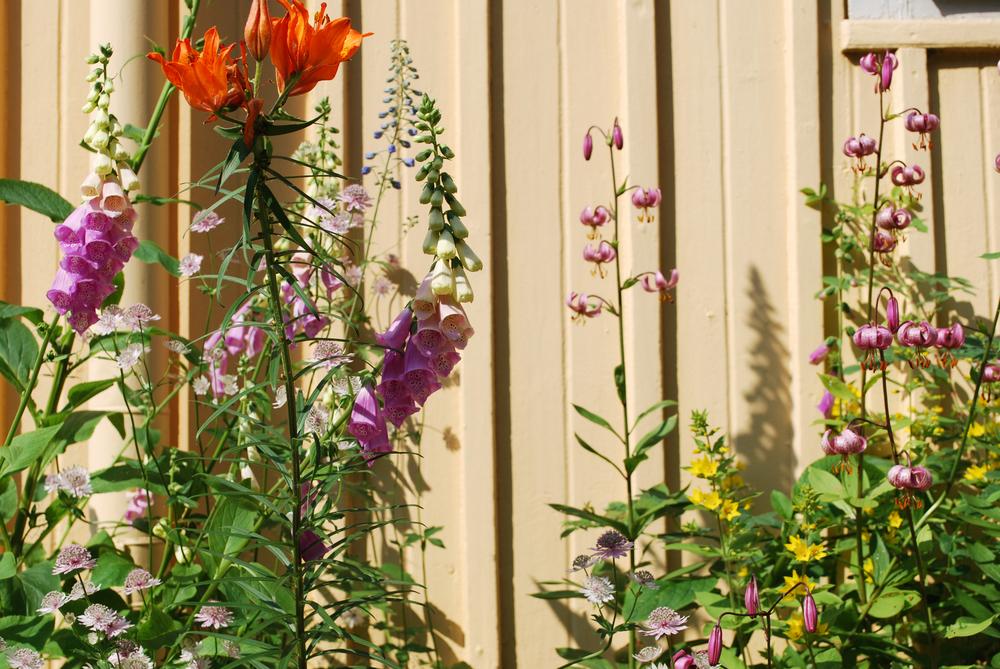 Blommor bispberg.jpg