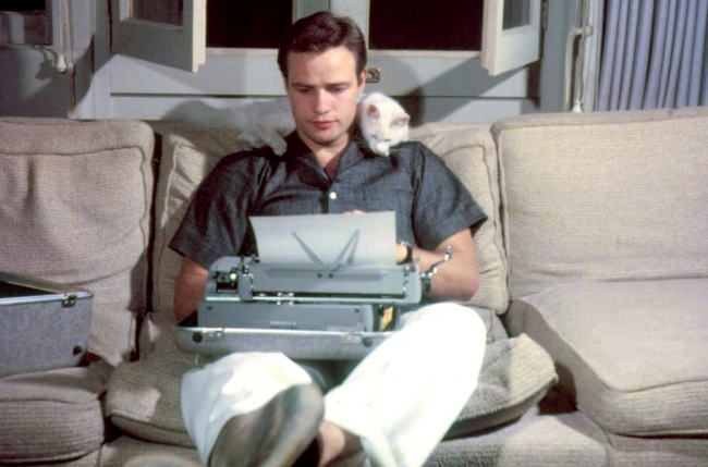 Marlon brando typing with cat.jpg