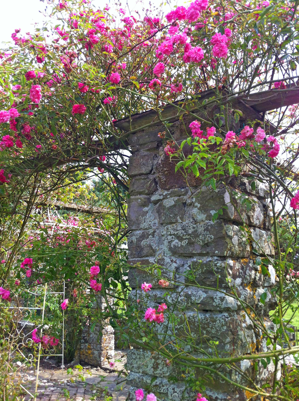 Rose Arbour in bloom.jpg