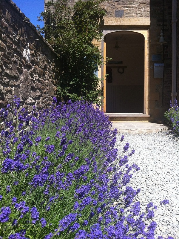 West Wing entrance lavendar.jpg