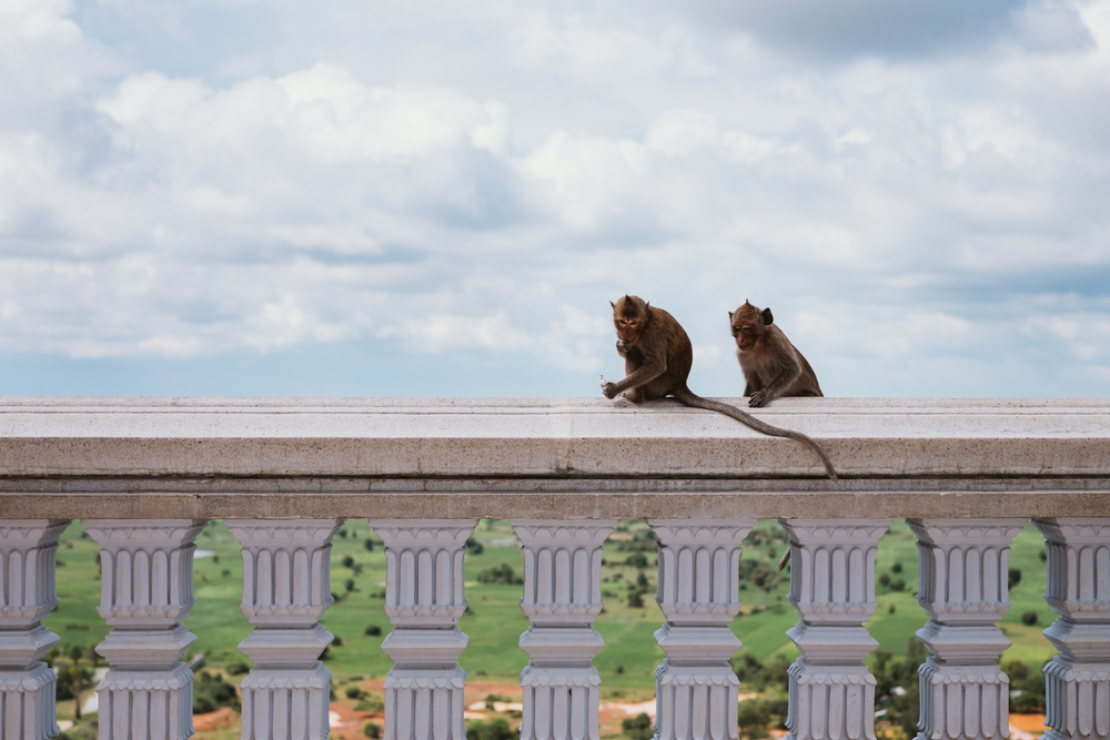 Monkeys probably planning their next attack lol :)
