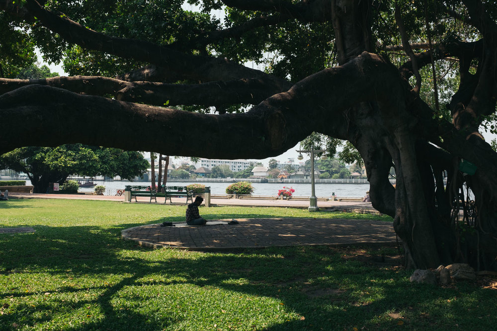 A man reading a book under a tree in a small park by the river