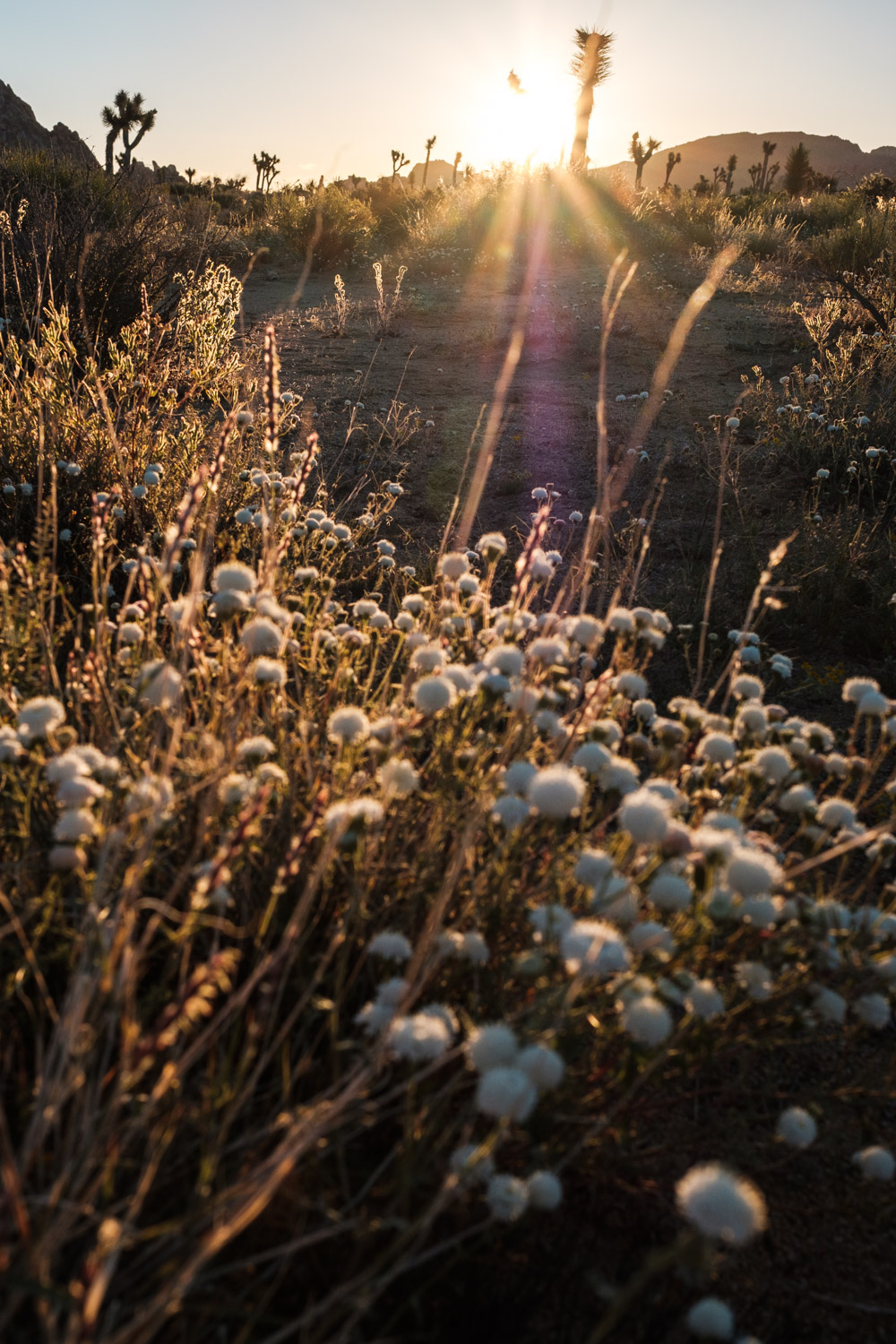 White, little flowers shinning in gold during sunset
