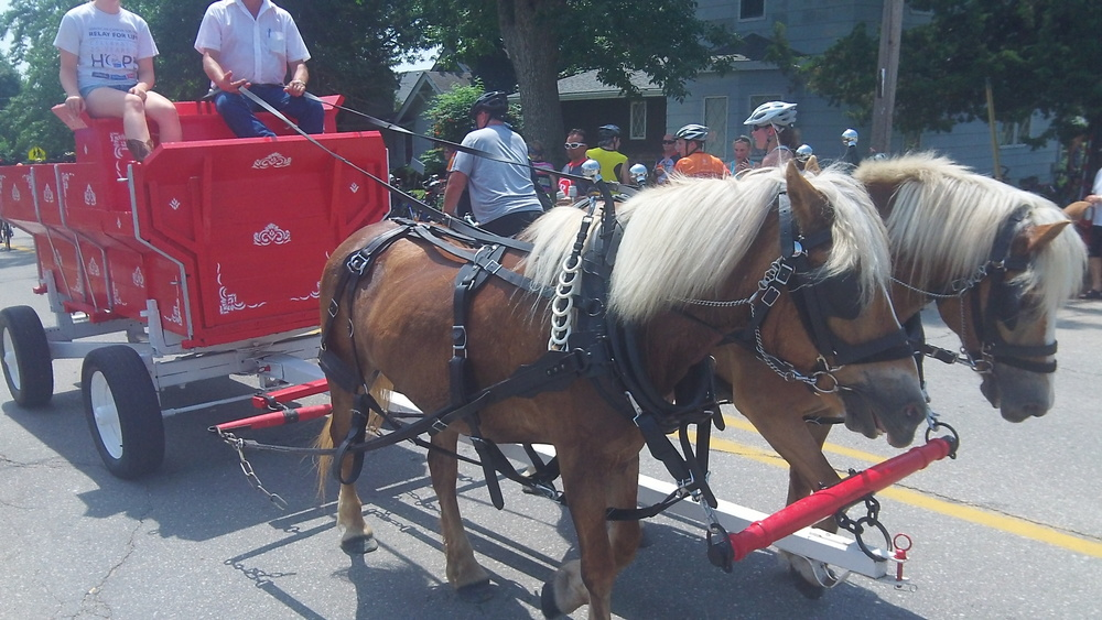 Clydesdale lite