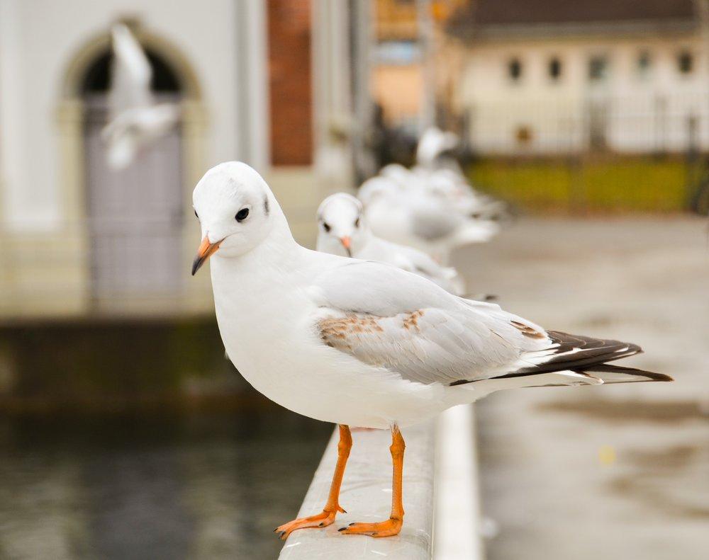 seagull-3289991_1920.jpg