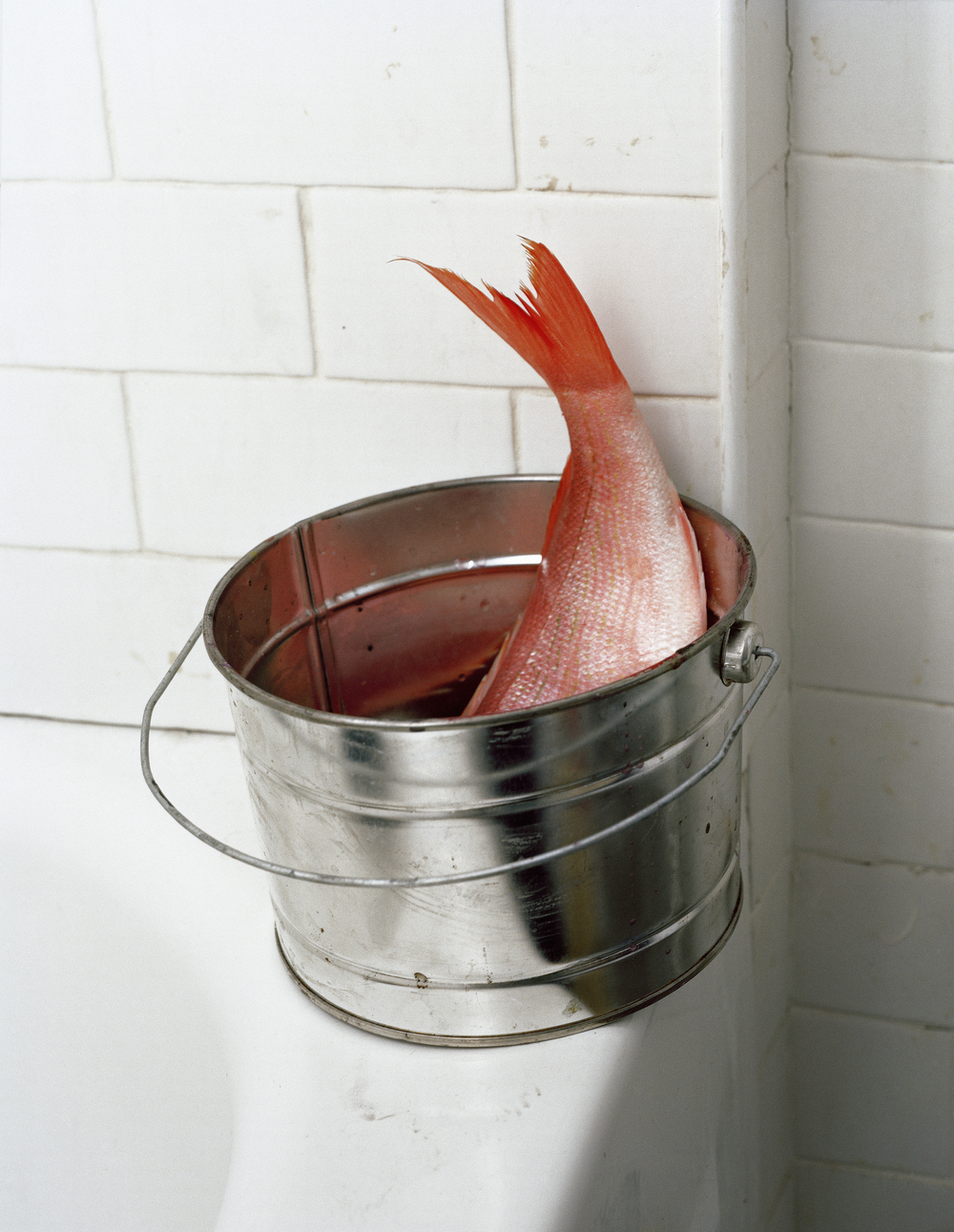 1fish bucket.jpg