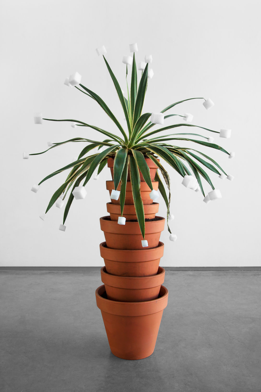 "Cube Tips (for Victoria) , 2014, agave plant, soil, terra cotta pots, styrofoam, approx. 60""x 20""x 14"" (152.4 cm x 50.8 cm x 35.6 cm)"