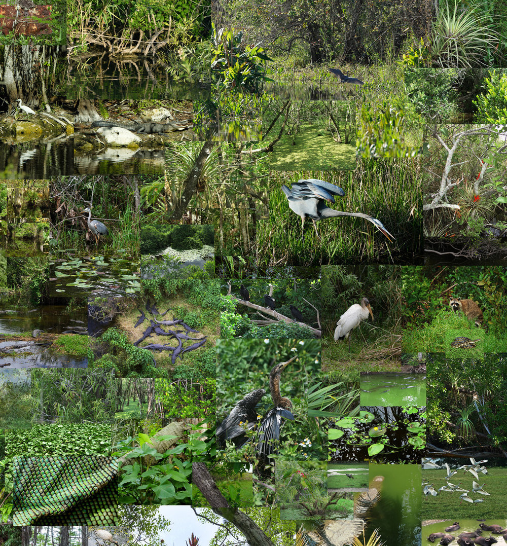 "Everglades  ,  detail, 2014, vinyl wallpaper (approx. 200 composited photographs taken in Everglades, Florida), 78""x 84"" (198.1 cm x 213.4 cm)"