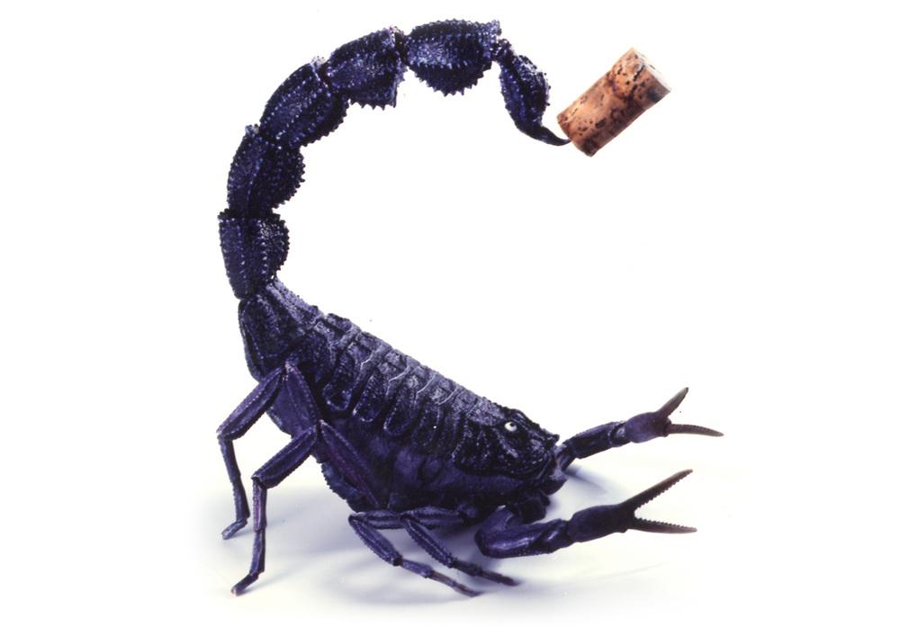 Scorpion Thumbnail.jpg