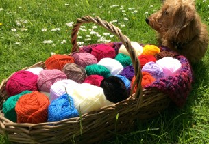 Miniature dachshund sat next to a basket of crochet wool