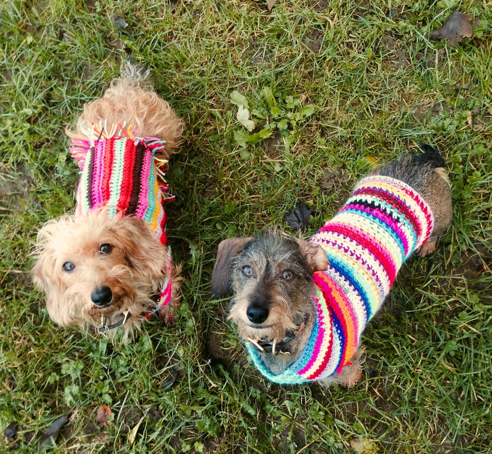Dachshunds in crochet dog coats