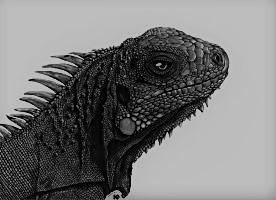 01_Iguana-b.jpg