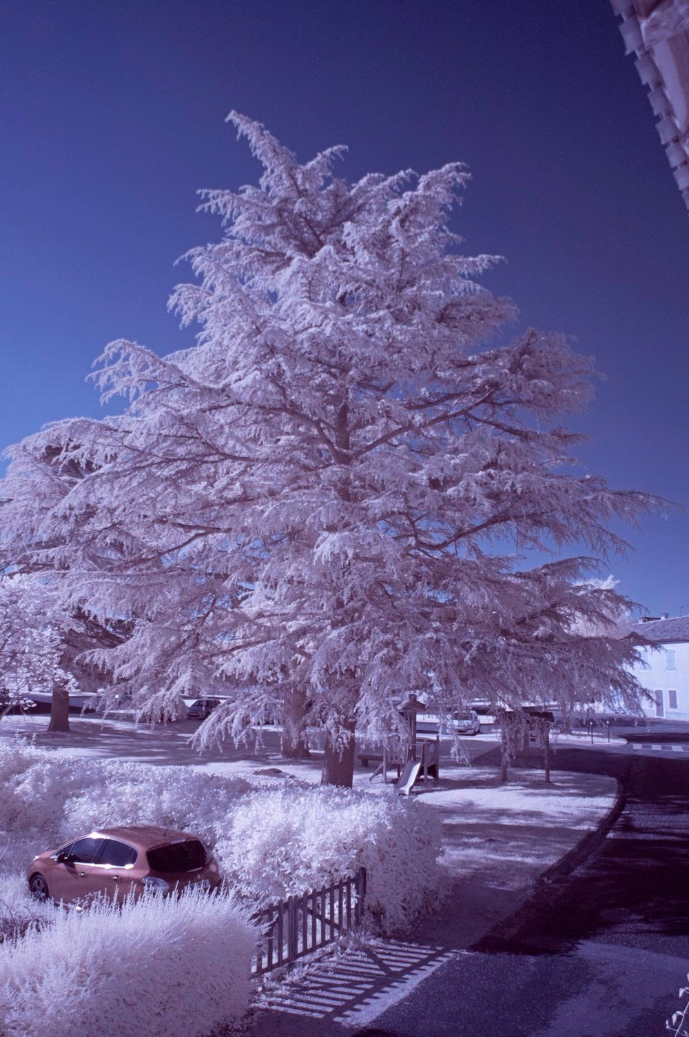 IR image corrected with channel swapping.