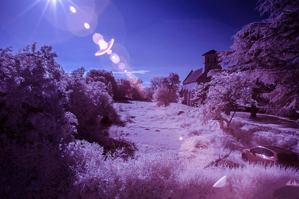 Colour swapped IR image of our garden