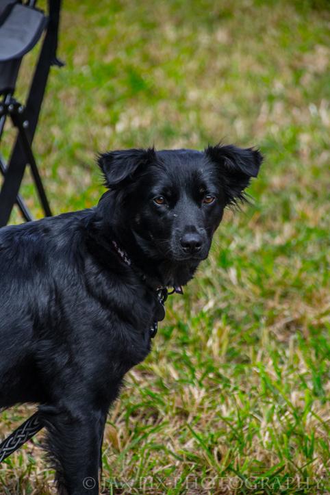 Puppy Spot.jpg