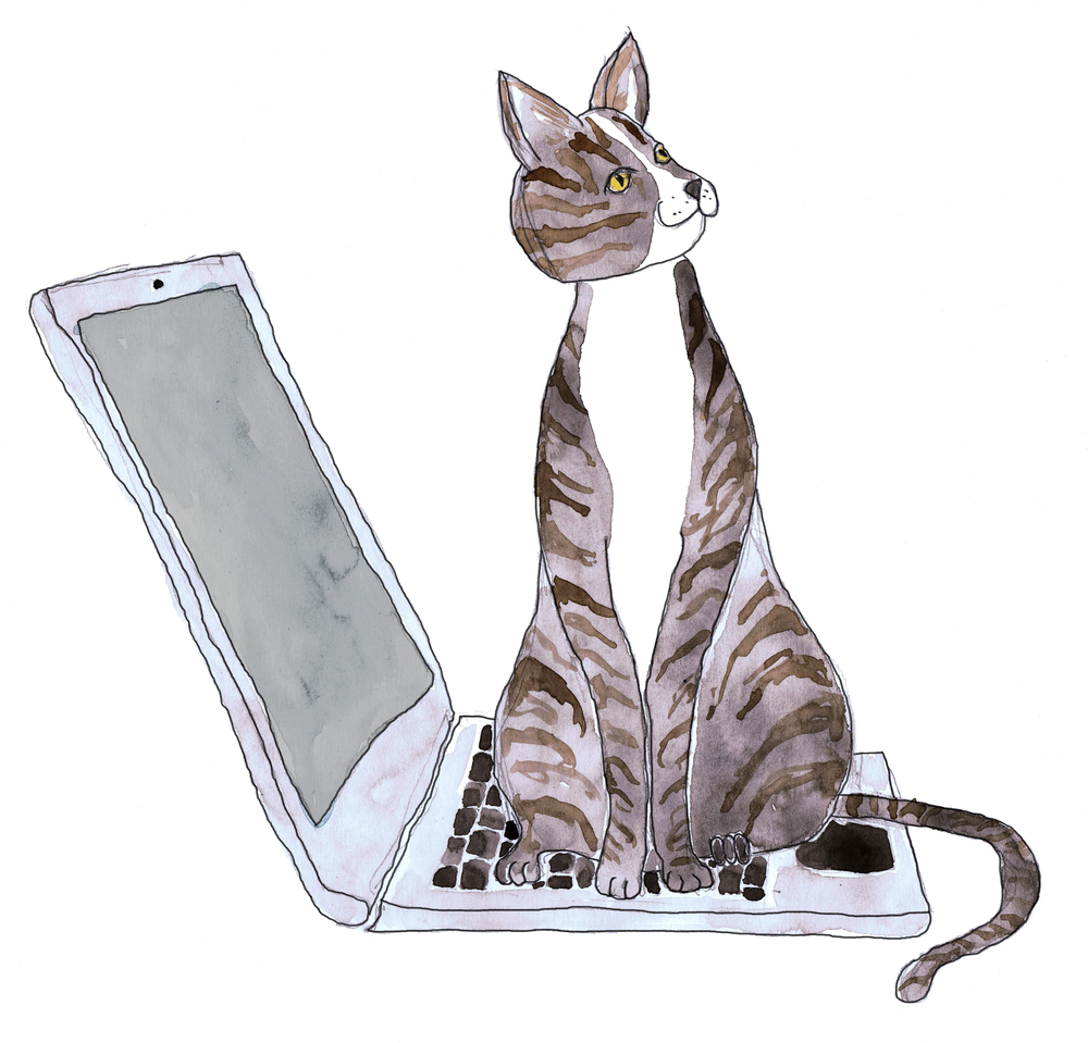 cat laptop edit line grey laptop.jpg