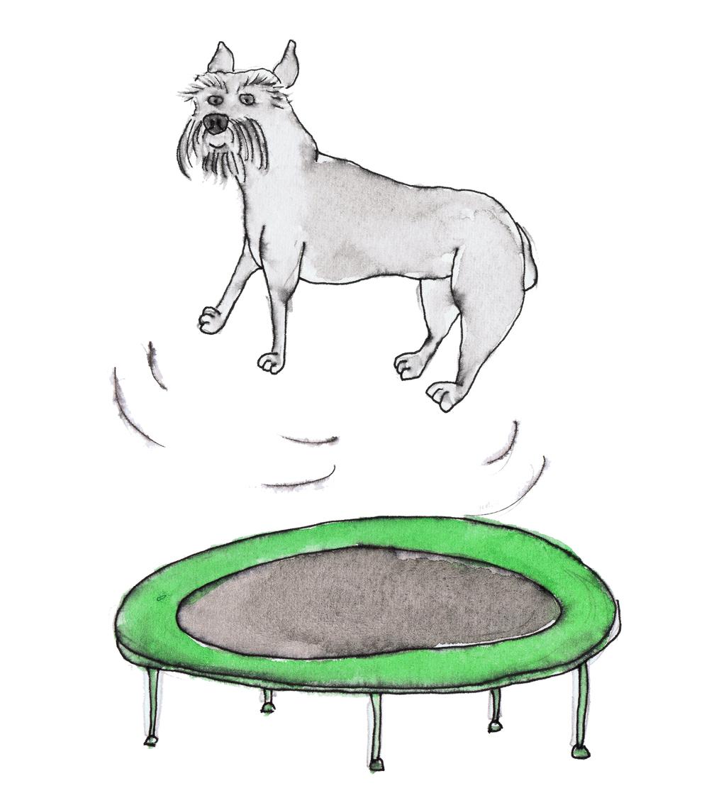 flash trampoline.jpg
