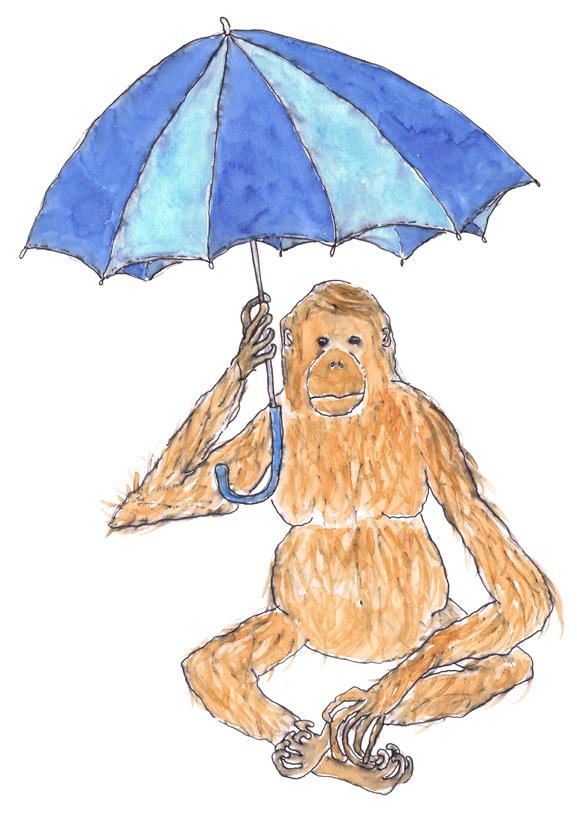 sml Orangutan.jpg