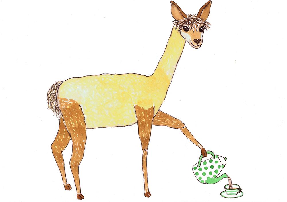 sml alpaca v.2.jpg