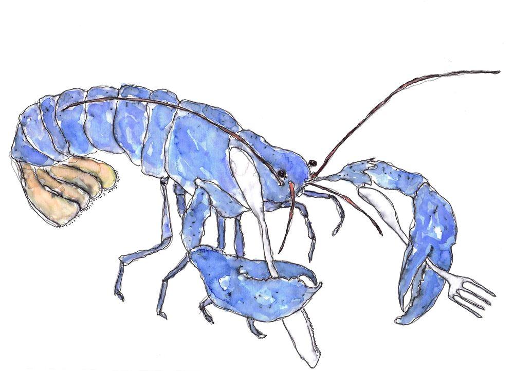 Lobster Low-res.jpg