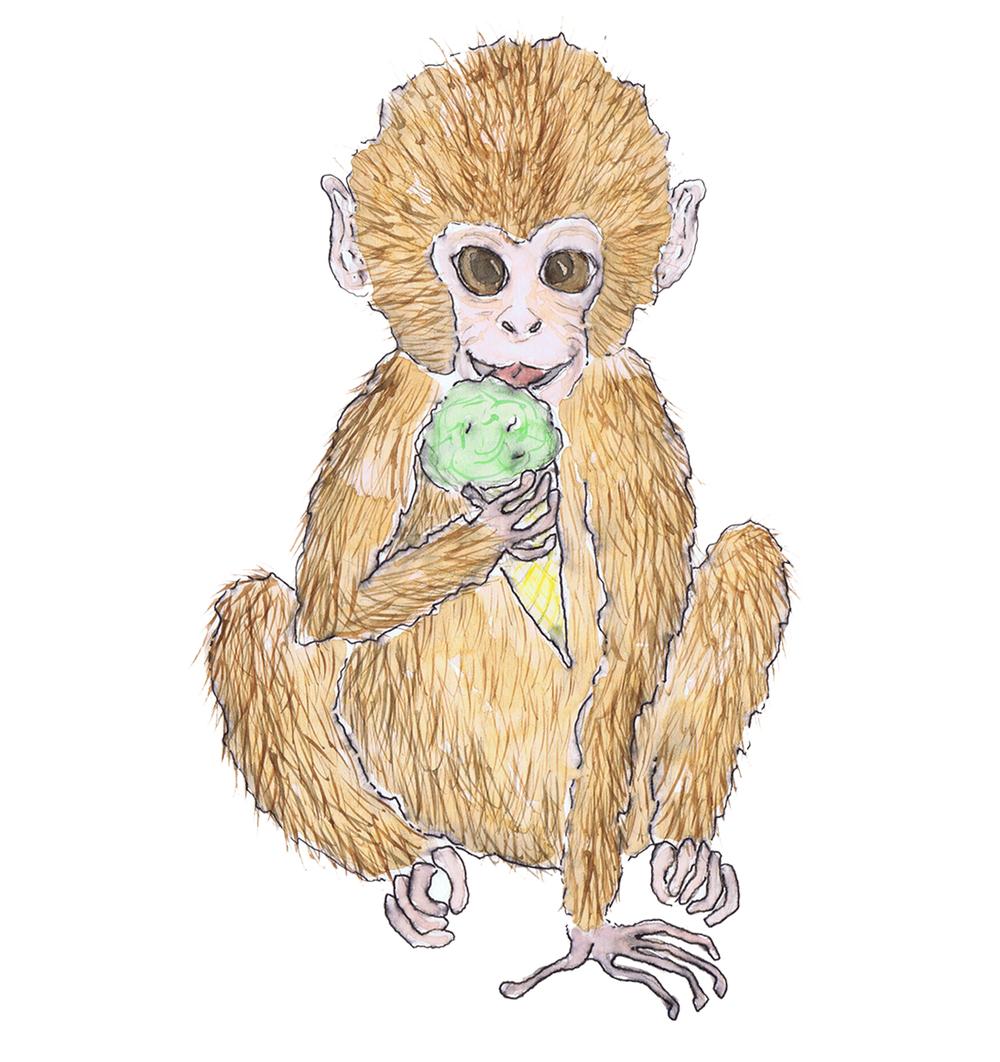 sml monkey.jpg