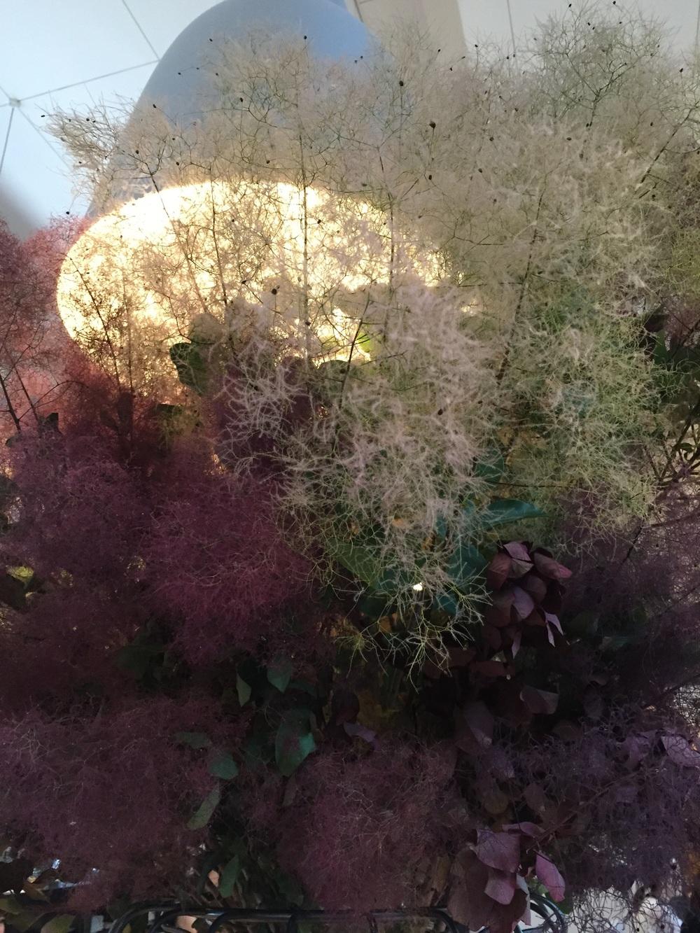 Beautiful smoke bush arrangement on the shared table.