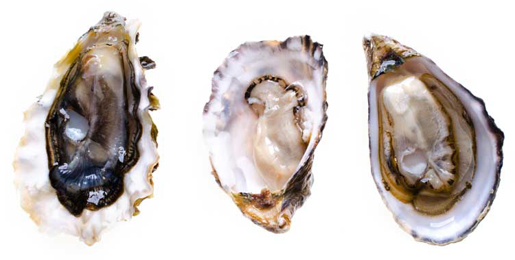 Pick the brains of true oyster people as you learn about different species, seasonality, and more.