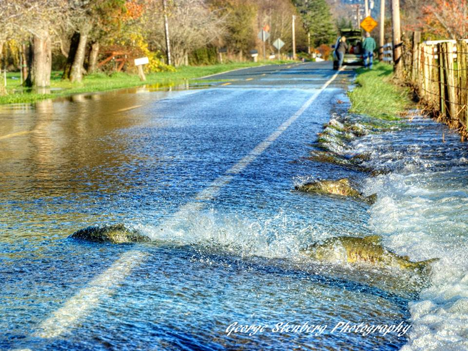 explore-hood-canal-george-stenberg-shelton-wa.jpg