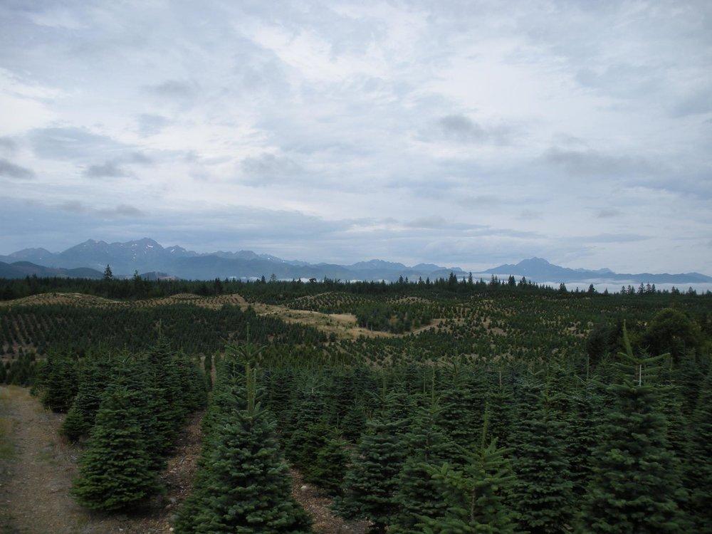 Allens Tree Farm | Tahuya