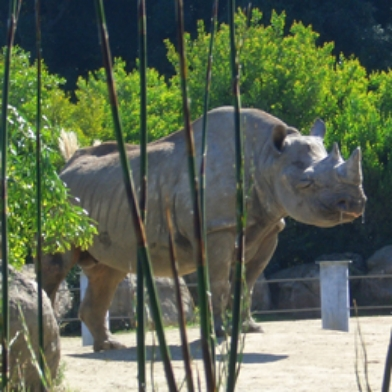 SF Zoo - Hippo + Rhino Exhibit
