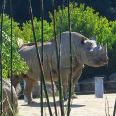 SF Zoo - Hippo + Rhino Exhibit