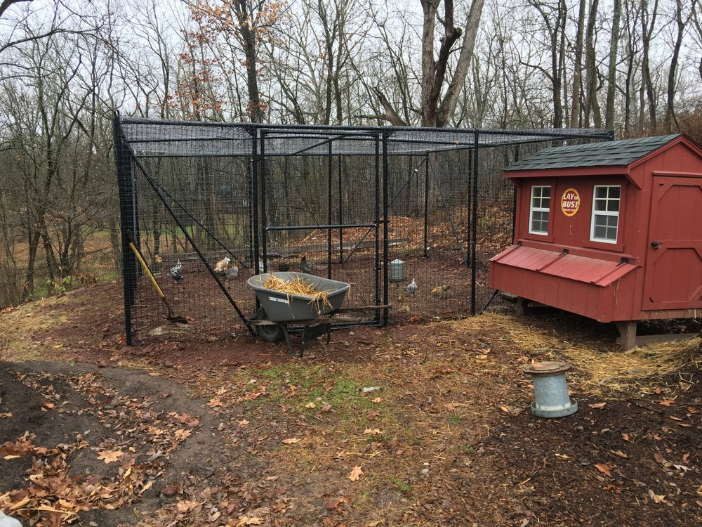 Custom chicken coop. 20' x 20' x 7', poly and metal fence with 4' access gate.