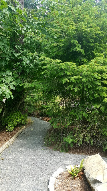 Woodlands 3.5.jpg