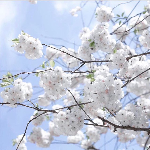 🌸 Flowers in bloom 🌸 #spring #flowerinspiration #nyc #parkaveskin #tribeca