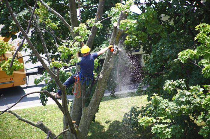 Keep you trees trimmed to protect your home, and neighboring homes, from branches that can be snapped off during a storm. (Photo: iStock)