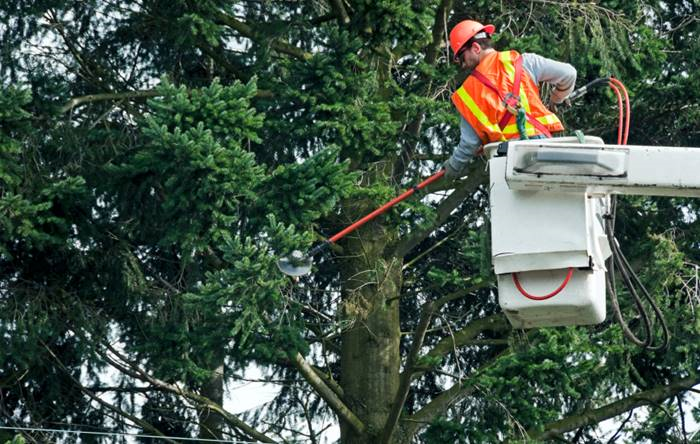 Trim your trees to keep them from damaging your home during a storm. (Photo: iStock)