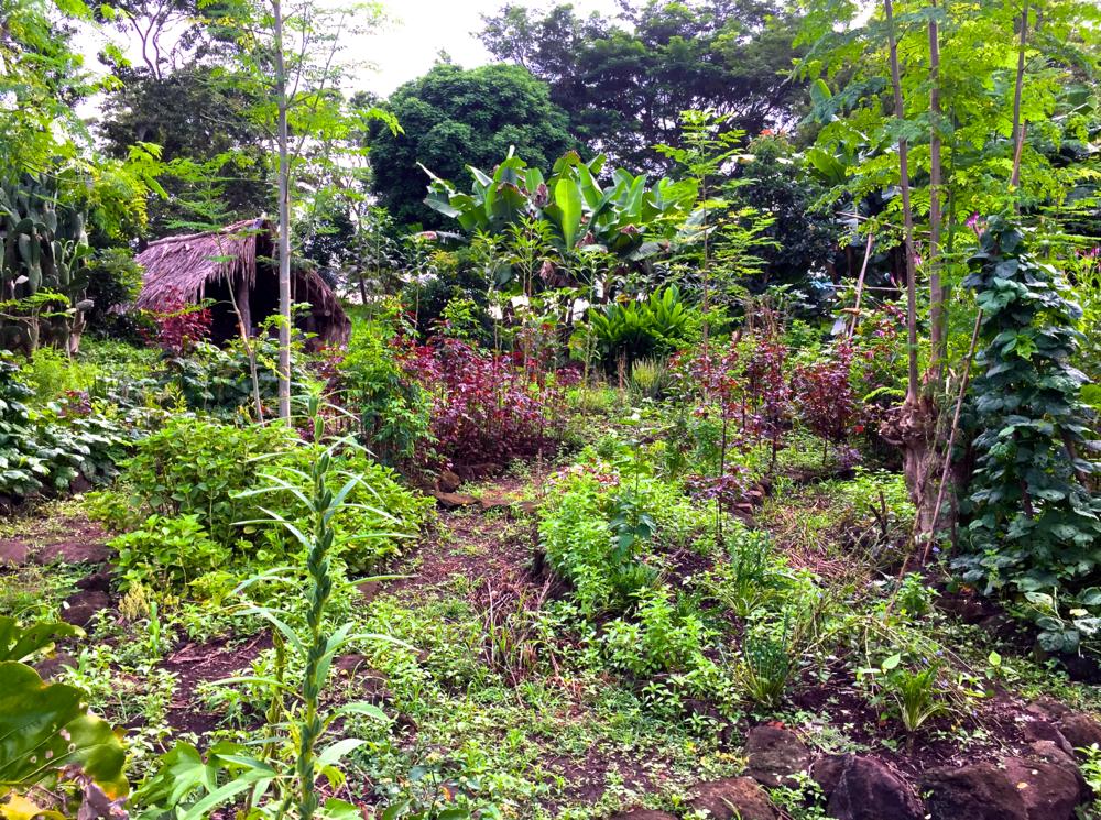 Inanitah veggie garden