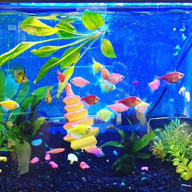 Love these neon fishes and their aquarium decor #neon #colors #aquarium