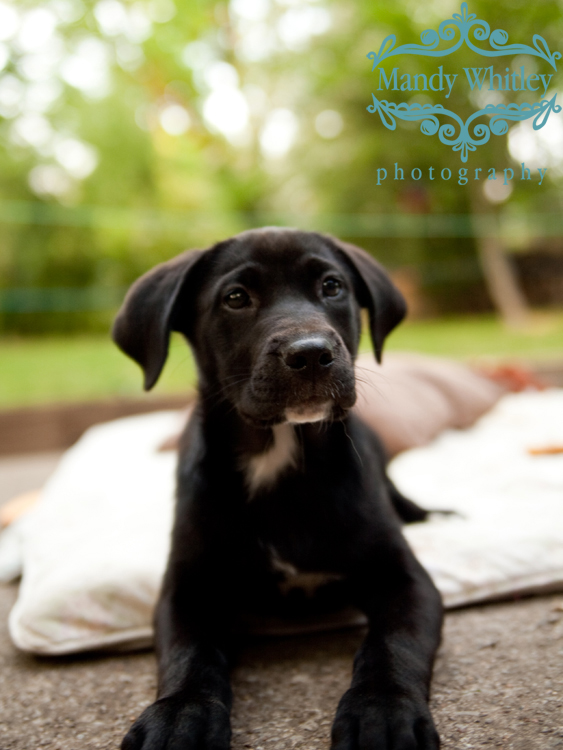 Nashville Pet Photography