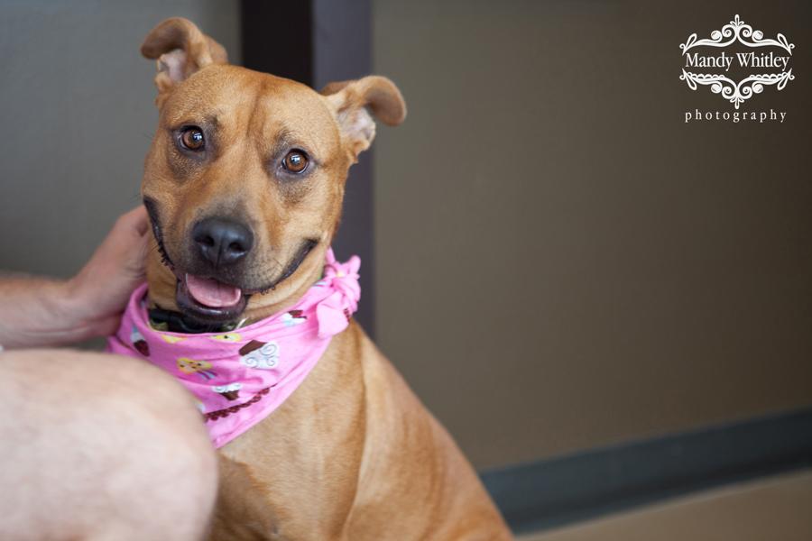 East CAN Nashville Dog Adoption
